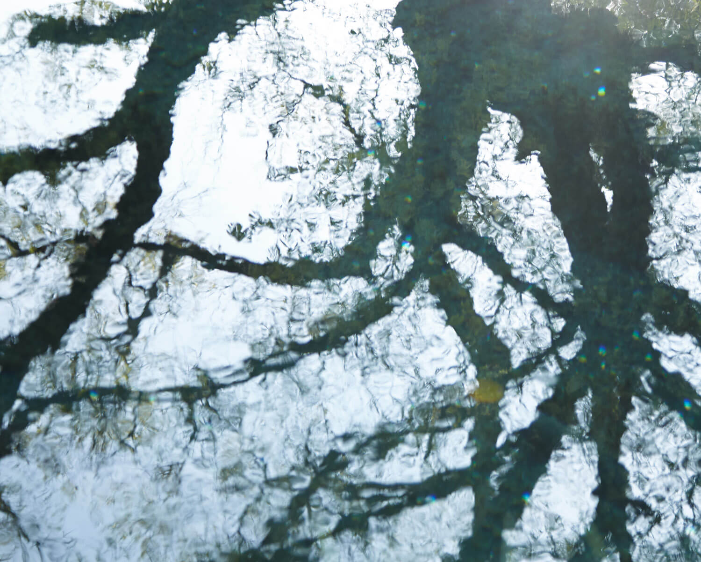 水面に映る枝影2