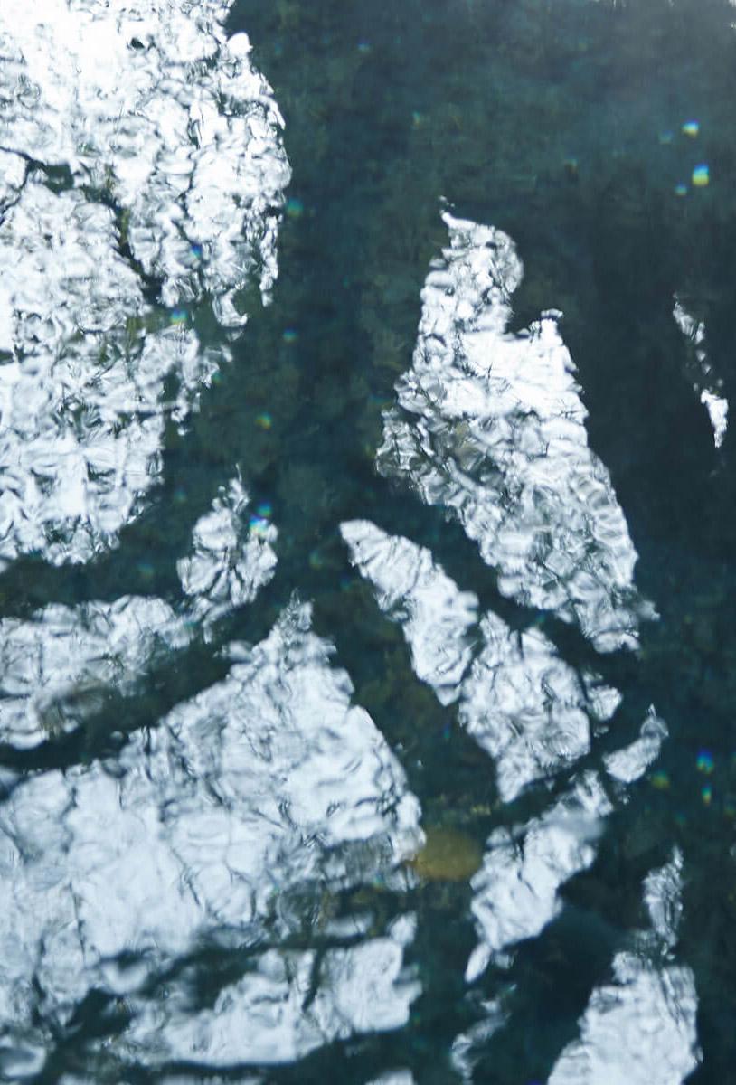 水面に映る枝影1